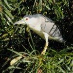Water bird breeding at lake