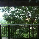 Tree in front of balcony obstructing sea view