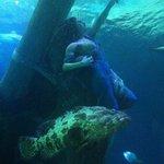 in fondo al mar...
