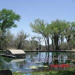 The springs at Rattlesnake Springs