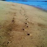 Footsteps on Shell beach