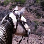 My wonderful horse