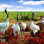 National Rare Bird Reserve