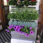 Kikka is home to a florist