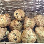 Freshly made Scones each day
