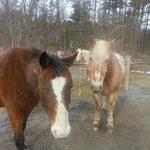 Best horses n the poconos
