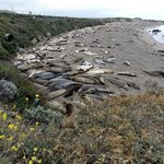 Elephant seals resting on the beach
