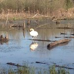Heron County Park