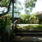 Under the Mango tree
