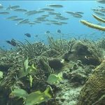 Tunich Reef Photo