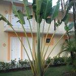 beautiful trees amazing palms