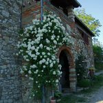White Rose at Ancora del Chianti B&B