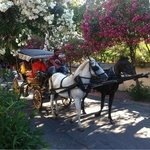 typical horse carriages on the island