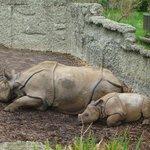 Foto di Zoo Basel
