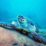 Sea Turtle (Pattaya Near Islands)