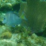 Snorkel pic