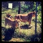 Foto de Carolina Tiger Rescue