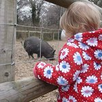 Noisy pigs