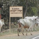 Sacred Cows and Lodge sign