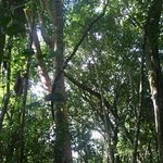 Rio Bravo Forest Reserve Photo