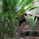 Orchid cabin exterior and jungle vegetation