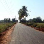 Road leading to Benaulim beach.