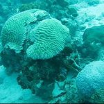 Sponge Reef Geological Park