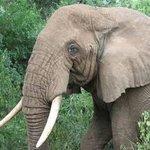 Mwabvi Game Reserve Photo