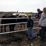 Bufali, Tori, Cavalli e non solo....