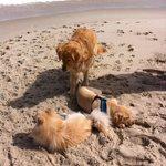 Enjoying playing on the beach