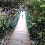 Jinzifeng Forest Park