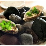 Oysters on Beach Rock