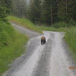 Brown bear spotted with Brown Bear Lodge tour