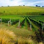 Bentwood Wines