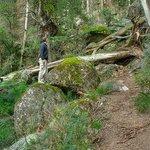 Foto de Mount Cole State Park