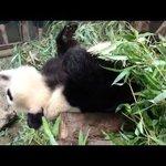 Tropical Liangyuan Zoo