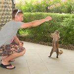 Feeding the wild coati