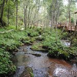 Taoshan Forest Park