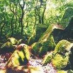 Litchi Forest