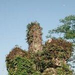 Jinkeng Forest