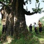 Guiguling National Forest Park