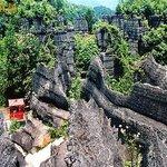 Ordovician Stone Forest