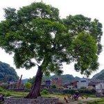 Dayuan Yuankou Nature reserve