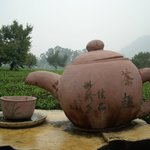 Yingde Tea World