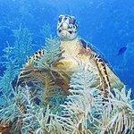 Cayman Turtle Divers
