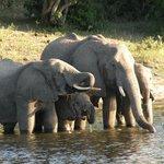 im Chobe Park