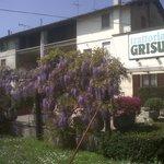 Photo of Grisu