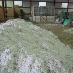 The raw cotton waiting to be processed