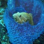 La Machaca Reef Foto