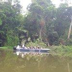 Rainforest along our canal